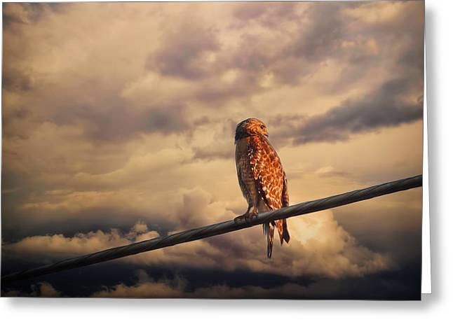 Bird On A Wire Greeting Cards - End of the Day Greeting Card by Jai Johnson