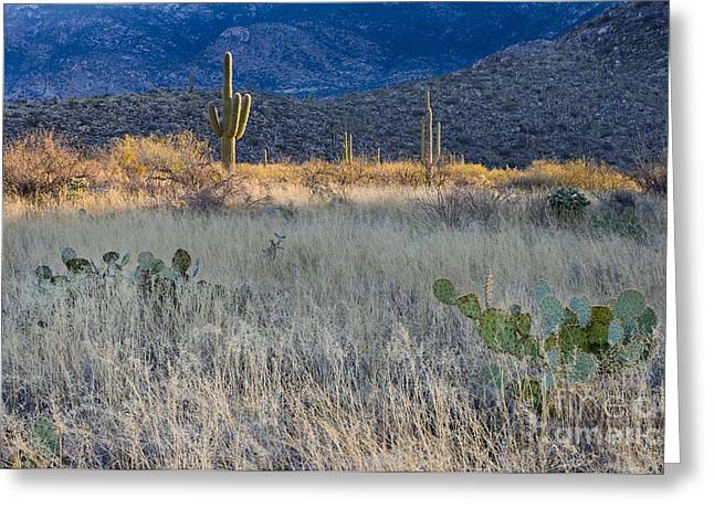 Caryophyllales Greeting Cards - Engelmanns Prickly Pear Cactus Greeting Card by John Shaw