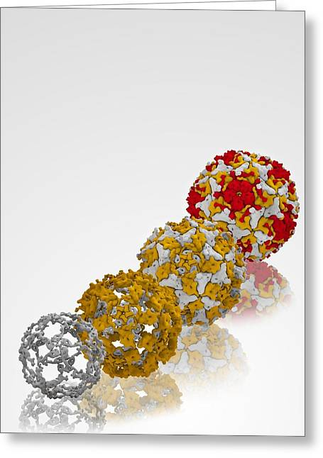 Component Greeting Cards - Enterovirus capsid proteins structure Greeting Card by Science Photo Library