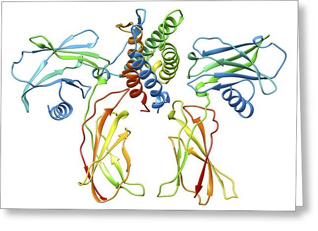 Helix Greeting Cards - Erythropoietin hormone complex Greeting Card by Science Photo Library
