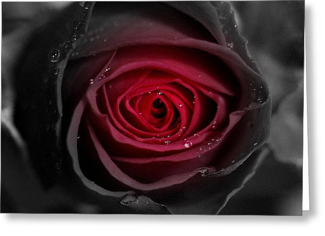 Eternally Yours Rose Greeting Card by Marie Neder