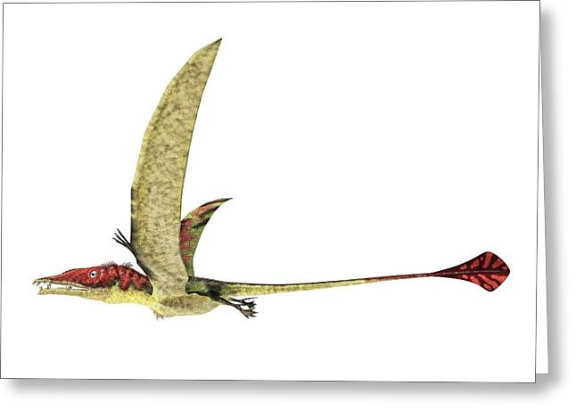Eudimorphodon Greeting Card by Leonello Calvetti