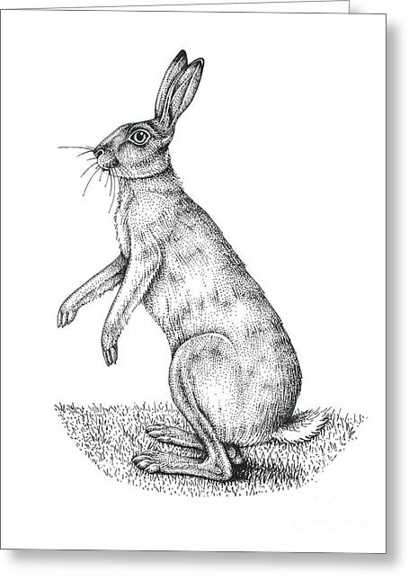 Western Asia Greeting Cards - European Hare, Artwork Greeting Card by Lizzie Harper