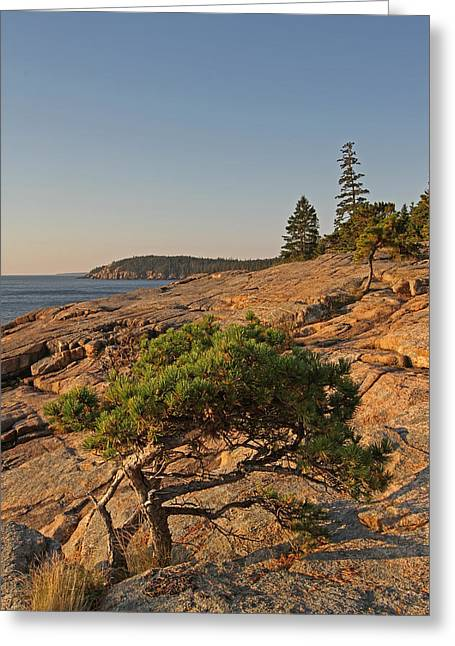 Evergreen Greeting Card by Juergen Roth