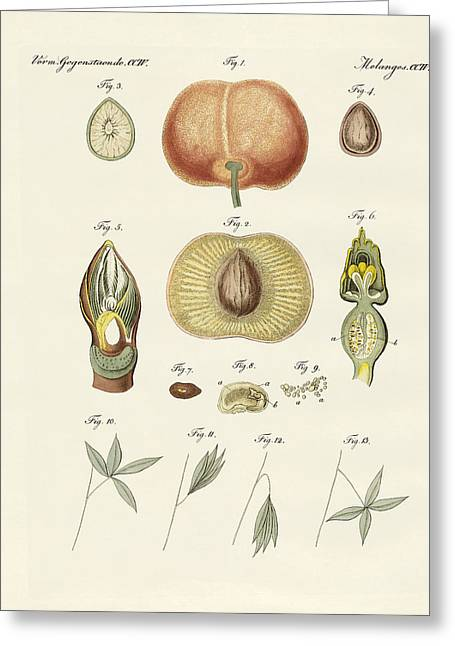 Pumpkins Drawings Greeting Cards - Evolution and reproduction of plants and sleep of the leaves Greeting Card by Splendid Art Prints