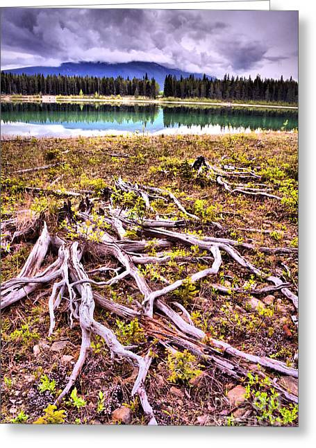 Tree Roots Photographs Greeting Cards - Exposed Greeting Card by Tara Turner