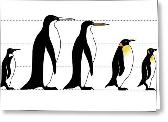 Extinct And Living Penguin Comparison Greeting Card by Claus Lunau