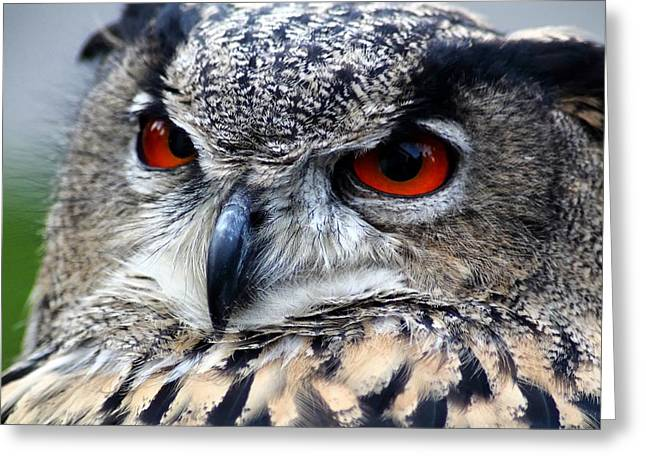 Lovely Owl Greeting Cards - Eyes of the Hunter Greeting Card by Mountain Dreams