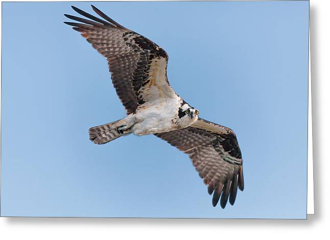 Wingtips Greeting Cards - Eyes On You Greeting Card by Rob Travis