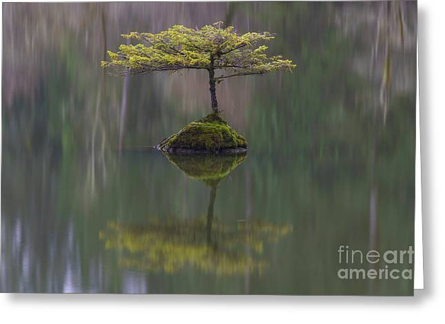 Port Renfrew Greeting Cards - Fairy Lake Fir Greeting Card by Carrie Cole