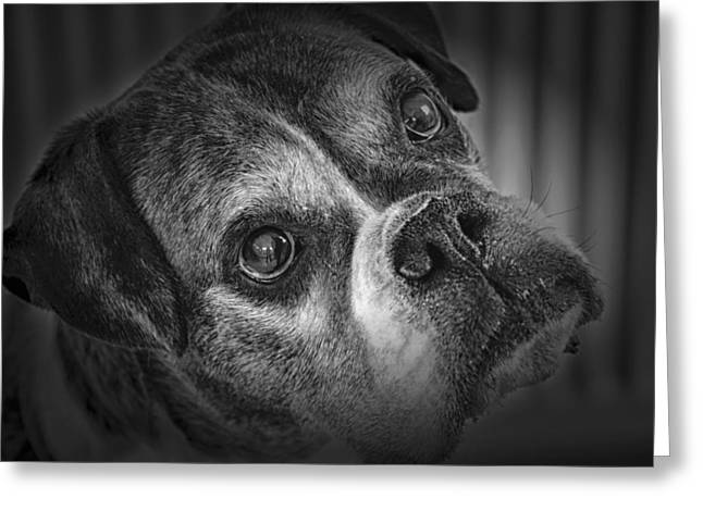 Boxer Greeting Cards - Faithful Companion Greeting Card by Mountain Dreams