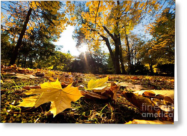 Fall Autumn Park. Falling Leaves Greeting Card by Michal Bednarek