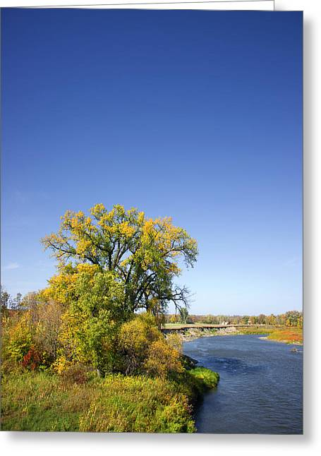 Fall River Scenes Greeting Cards - Fall Color and River Scene Greeting Card by Donald  Erickson