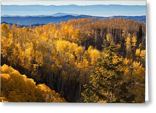 Little Cottonwood Canyon Greeting Cards - Fall Colors on the Wasatch Plateau Greeting Card by Utah Images