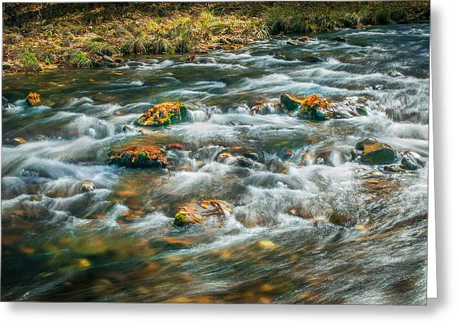 Tree Roots Greeting Cards - Fall Colors Stream Great Smoky Mountains Painted  Greeting Card by Rich Franco