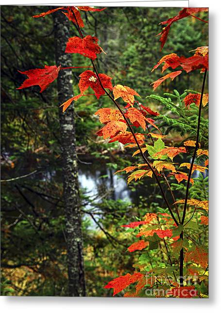 Creek Greeting Cards - Fall forest and river Greeting Card by Elena Elisseeva
