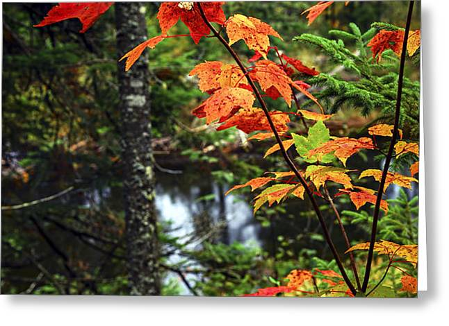 Fall forest and river Greeting Card by Elena Elisseeva