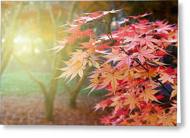 Red Photographs Photographs Greeting Cards - Fall forest Greeting Card by Les Cunliffe