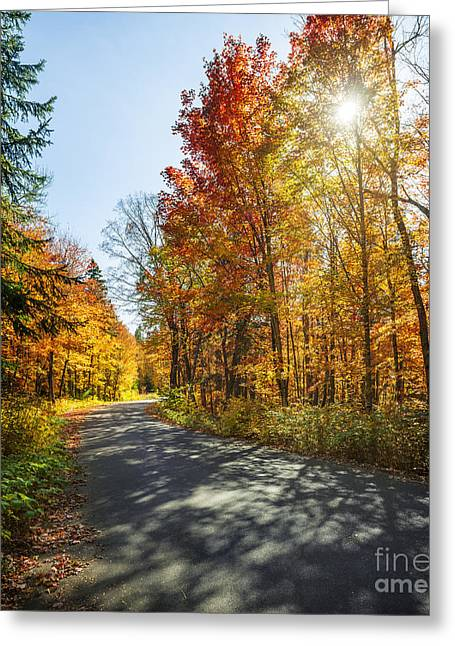 Bending Light Greeting Cards - Fall forest road Greeting Card by Elena Elisseeva