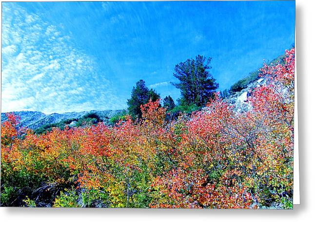 Bishop Hill Greeting Cards - Fall Is Here Greeting Card by Marilyn Diaz