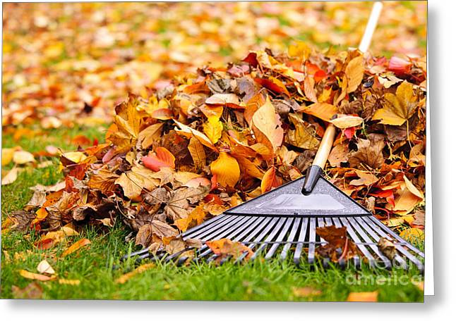 Chore Greeting Cards - Fall leaves with rake Greeting Card by Elena Elisseeva