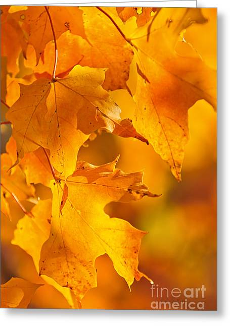 Red Maple Tree Branches Greeting Cards - Fall maple leaves Greeting Card by Elena Elisseeva