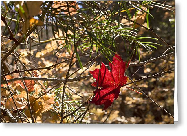 West Fork Greeting Cards - Fallen Greeting Card by Bj Lewis