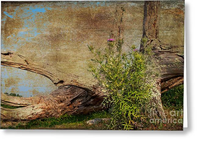 Blue Thistles Greeting Cards - Fallen Giant Greeting Card by Dan Carmichael