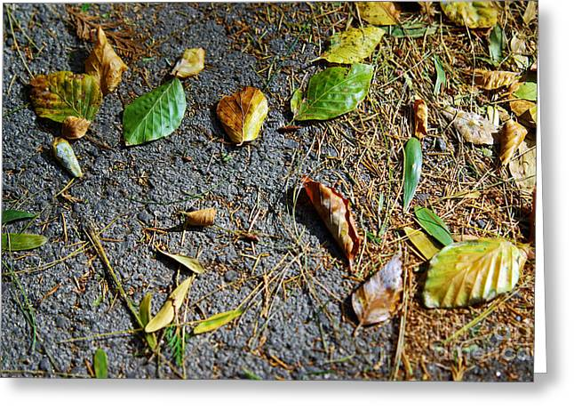 Red Fallen Leave Photographs Greeting Cards - Fallen Leaves Greeting Card by Carlos Caetano