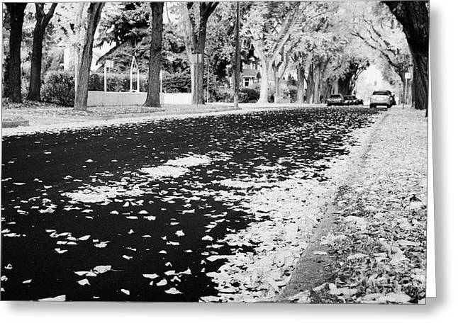 Drain Greeting Cards - fallen leaves in city park residential heritage neighborhood saskatoon Saskatchewan Canada Greeting Card by Joe Fox