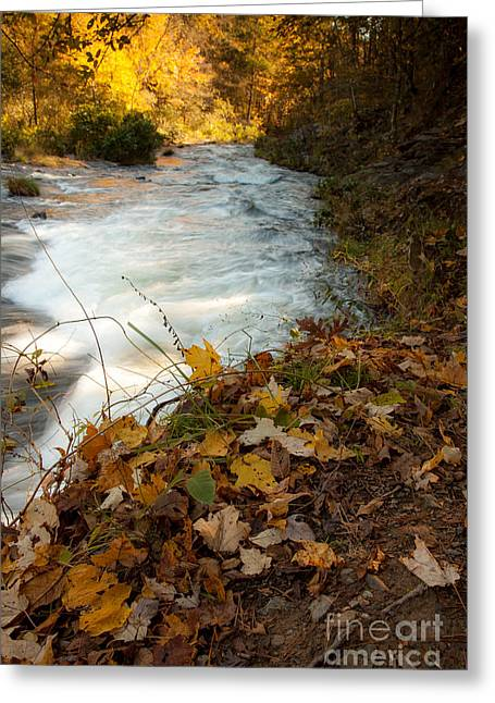 Beavers Bend Park Greeting Cards - Fallen Leaves Greeting Card by Iris Greenwell