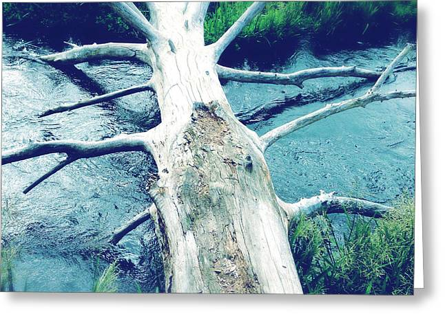 Stream Greeting Cards - Fallen log Greeting Card by Les Cunliffe