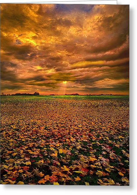 Fall Trees Greeting Cards - Fallen Greeting Card by Phil Koch