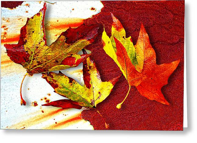 Fallen Leaf Greeting Cards - Falling Leaves Greeting Card by Ron Regalado