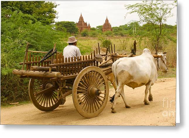 Farmer Driving An Ox Cart Old Bagan Burma Greeting Card by Ralph A  Ledergerber-Photography