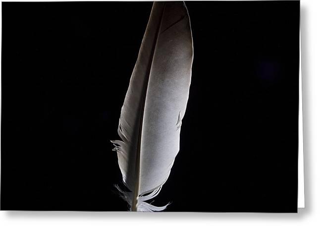 Bird Shot Greeting Cards - Feather Greeting Card by Bernard Jaubert