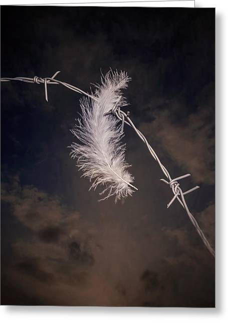 Violiating Greeting Cards - Feather Greeting Card by Joana Kruse