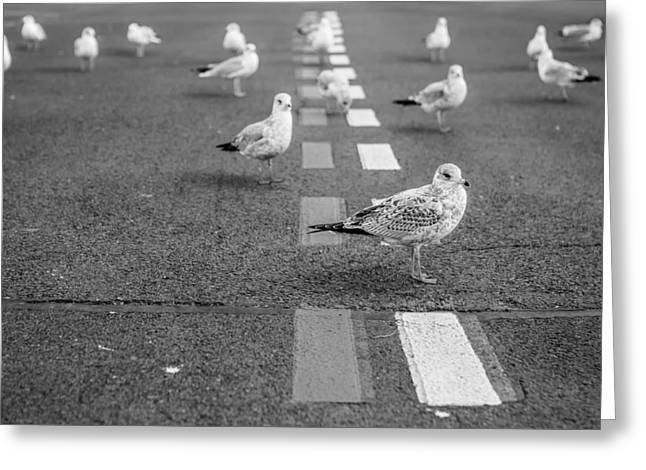 Roadblock Greeting Cards - Feathered Roadblock Greeting Card by Ryan McGuire