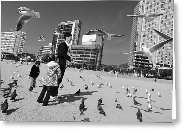 Feed The Birds Greeting Card by Roy Cruz