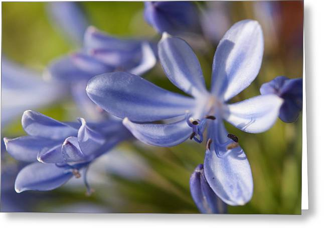 Wohnung Greeting Cards - Feeling Blue Greeting Card by Miguel Winterpacht