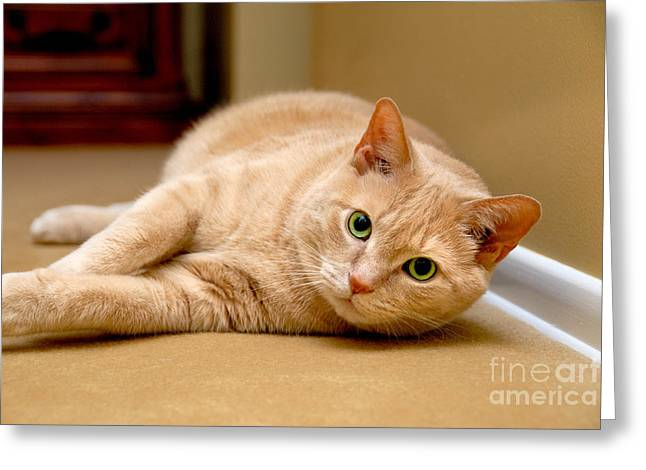 Resting Greeting Cards - Feline Portrait Greeting Card by Amy Cicconi
