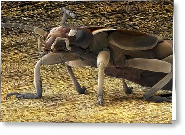 Biological Greeting Cards - Female Adult Earwig, Sem Greeting Card by Power And Syred