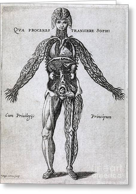 Emilio Greeting Cards - Female Anatomy, 17th Century Artwork Greeting Card by Middle Temple Library