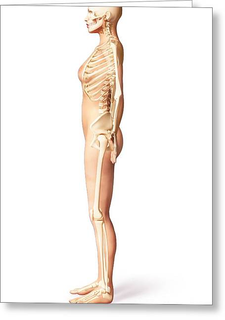 Floating Ribs Greeting Cards - Female Standing, With Skeletal Bones Greeting Card by Leonello Calvetti