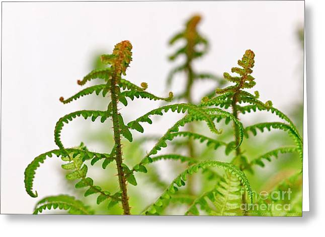 My Ocean Greeting Cards - Ferns Greeting Card by   FLJohnson Photography