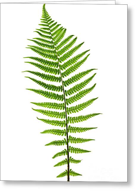 White Photographs Greeting Cards - Fern leaf Greeting Card by Elena Elisseeva
