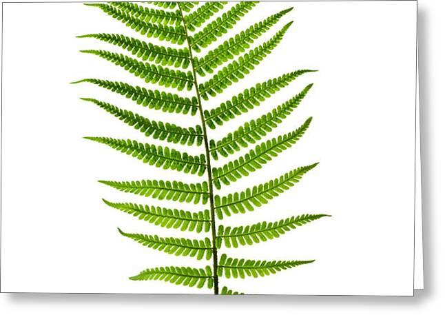 Fern leaf Greeting Card by Elena Elisseeva