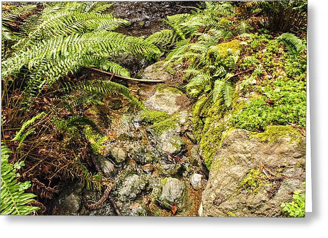 Babbling Greeting Cards - Ferns and redwood sorrel Muir Woods Greeting Card by Marianne Campolongo