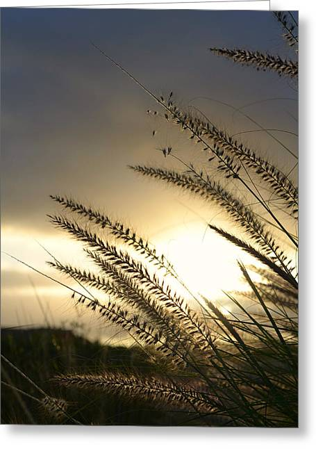 Ethereal Beach Scene Greeting Cards - Field Of Dreams Greeting Card by Laura  Fasulo