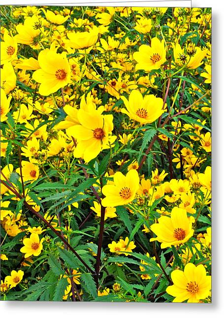 Babies Breath Greeting Cards - Field of Flowers Greeting Card by Frozen in Time Fine Art Photography